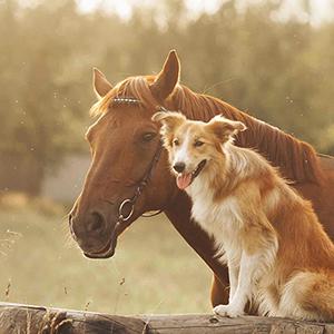 خوراک اسب و حیوانات خانگی