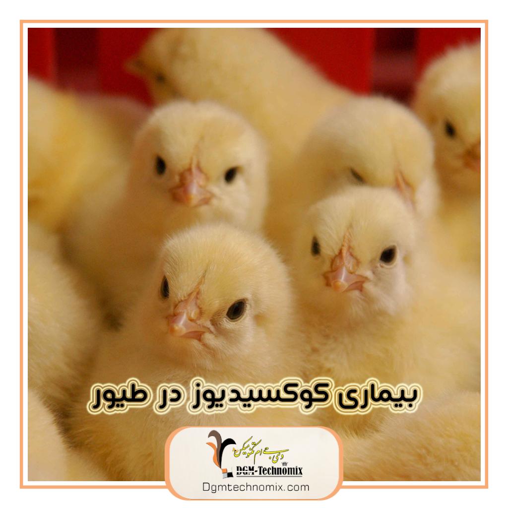 بیماری-کوکسیدیوز-در-پرندگان