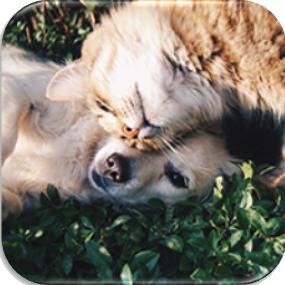 دی-جی-ام-تکنومیکس-حیوانات-خانگی