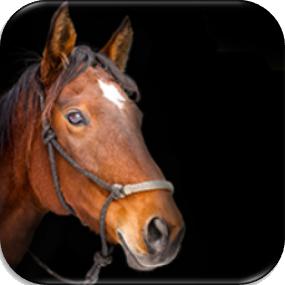 دی-جی-ام-تکنومیکس-خوراک-اسب