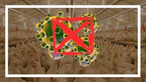 ویروس کرونا و تاثیر آن بر صنعت دام و طیور