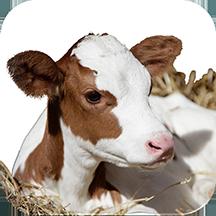 استارتر ویژه گوساله